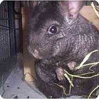 Adopt A Pet :: Willy - Avondale, LA