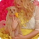 Adopt A Pet :: Rosebud