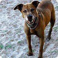 Adopt A Pet :: Mason - Georgetow, TX