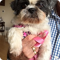 Adopt A Pet :: GRACIE pending - Eden Prairie, MN