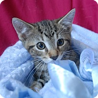 Adopt A Pet :: Jack - Winchendon, MA