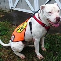 Adopt A Pet :: Maisy- Courtesy listing - Fredericksburg, VA