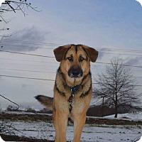 Adopt A Pet :: McKenna - Cranford, NJ