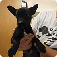 Adopt A Pet :: A565510 - Oroville, CA