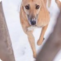 Adopt A Pet :: E's Gofar - Gerrardstown, WV