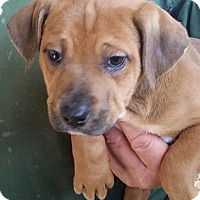 Adopt A Pet :: Ruth - Gainesville, FL