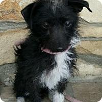Adopt A Pet :: Checkers - Canoga Park, CA