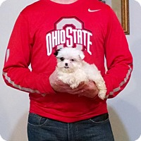 Adopt A Pet :: Parker - South Euclid, OH