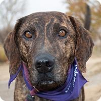 Adopt A Pet :: Toby - Sacramento area, CA
