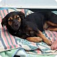 Adopt A Pet :: Mochi - Sudbury, MA