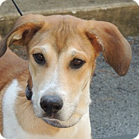 Adopt A Pet :: Hammy - Hagerstown, MD