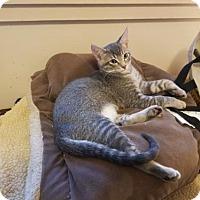 Adopt A Pet :: Valentine - Walnut Creek, CA