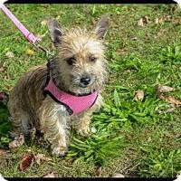 Adopt A Pet :: Arizona - Brick, NJ