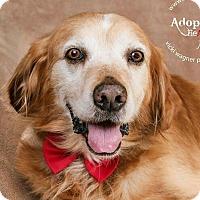 Adopt A Pet :: Buddy - Cincinnati, OH