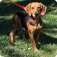 Adopt A Pet :: Wilbur: Fairfax - Cincinnati, OH