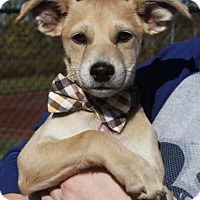 Adopt A Pet :: Larry in CT - Manchester, CT