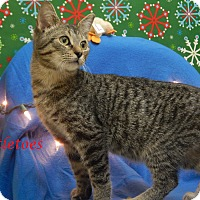 Adopt A Pet :: Mistletoes - Bucyrus, OH