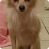 Adopt A Pet :: Steven - Colorado Springs, CO