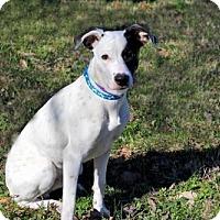 Adopt A Pet :: OTIS REDDING - richmond, VA