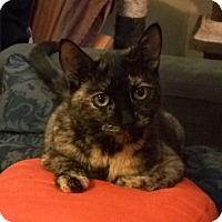 Adopt A Pet :: Anastasia - Toronto, ON