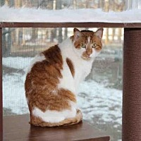 Adopt A Pet :: HELEN - Hampton Bays, NY