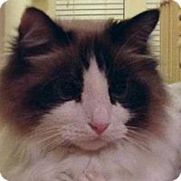 Adopt A Pet :: Mariah - Ennis, TX