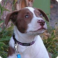 Adopt A Pet :: Denver - Rigaud, QC