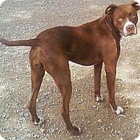 Adopt A Pet :: Rosie - Toledo, OH