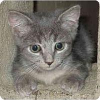 Adopt A Pet :: Leopold - Davis, CA