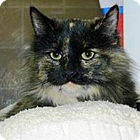 Adopt A Pet :: Anastasia - Cheyenne, WY