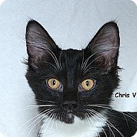 Adopt A Pet :: Chris V - Sacramento, CA