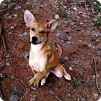 Adopt A Pet :: Geoffrey (fostered in NC) - Cranston, RI