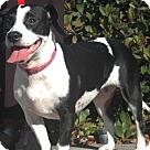 Adopt A Pet :: Mystery