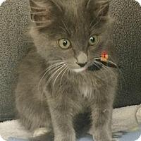 Adopt A Pet :: Hemi - North Highlands, CA