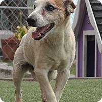 Adopt A Pet :: JACKIE - San Pablo, CA