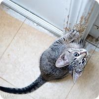 Adopt A Pet :: Frito - Athens, GA