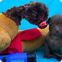 Adopt A Pet :: Slinky - Irvine, CA