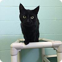 Adopt A Pet :: Onyx - Schererville, IN