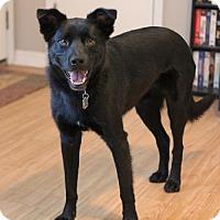 Adopt A Pet :: Jack Black - Lee's Summit, MO