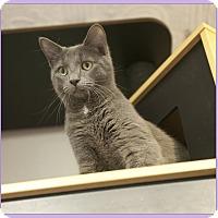 Adopt A Pet :: Timmy - Mt. Prospect, IL