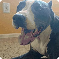 Adopt A Pet :: Smokey (Courtesy Listing) - Scottsdale, AZ