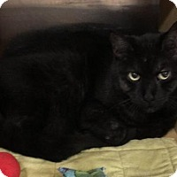 Adopt A Pet :: Mr. Hudson - Acme, MI