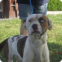 Adopt A Pet :: Mr T - Mount Sterling, KY