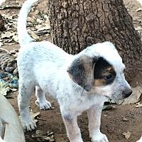 Adopt A Pet :: Nymeria - Blanchard, OK