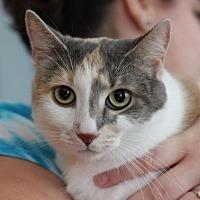 Adopt A Pet :: Sunnie Aloicious - Raleigh, NC