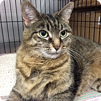 Adopt A Pet :: Jigglypuff - Toronto, ON