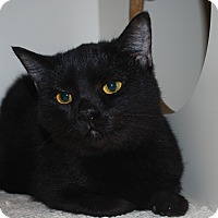 Adopt A Pet :: Quatro - New Castle, PA
