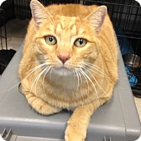 Adopt A Pet :: Big Mack - Temecula, CA