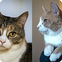 Adopt A Pet :: Emily Rose (and Norman) - Fairfax, VA