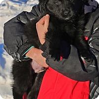 Adopt A Pet :: Yiza - Sawyer, ND